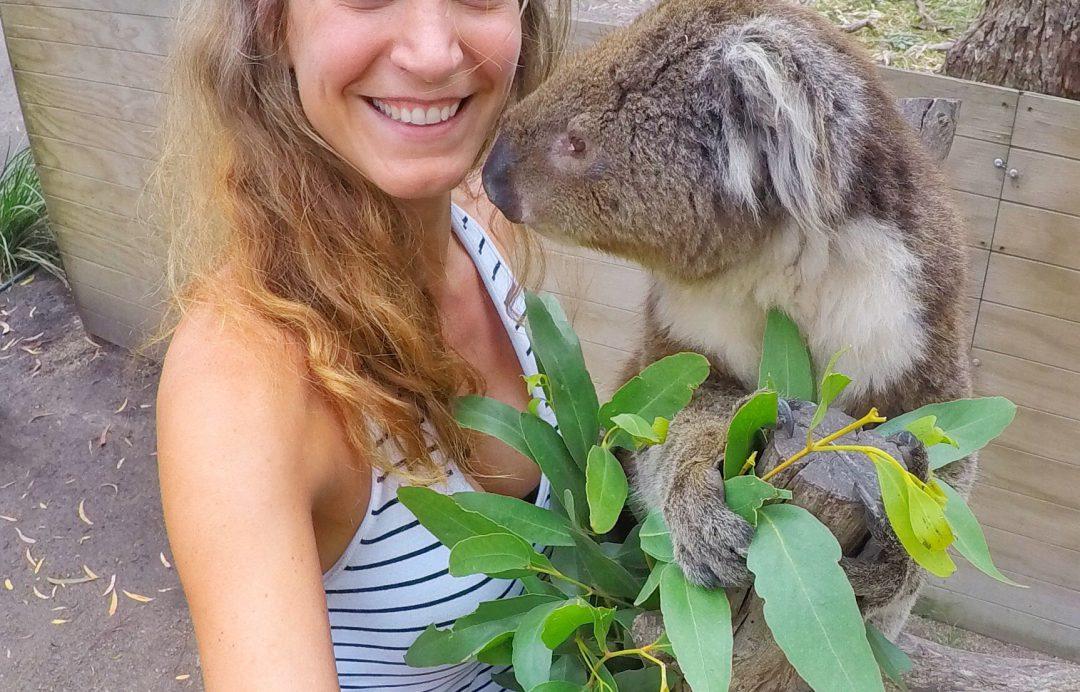 Koalalove