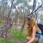 Hello Kangaroo!